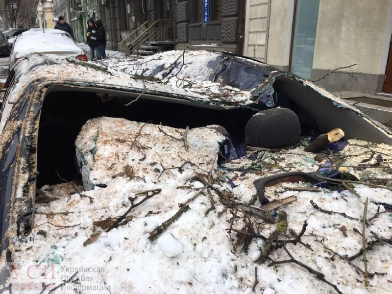 В центре Одессы упавшее многолетнее дерево придавило два автомобиля (фото) «фото»