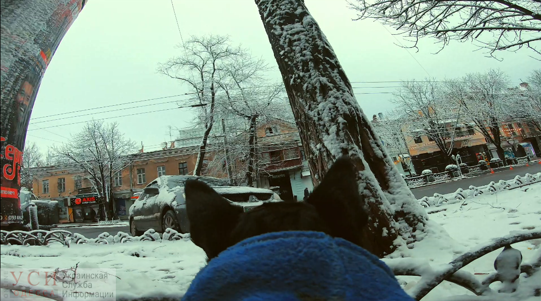 Снежная Одесса и горожане глазами скотчтерьера (видео) «фото»