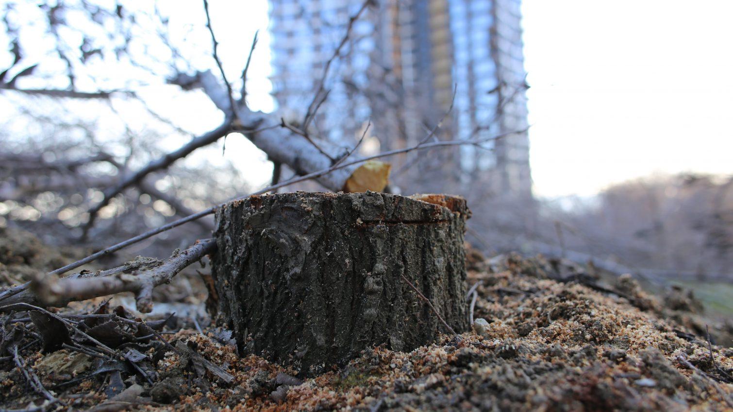 Экоинпекция проверила «экоцид» на Трассе здоровья: пострадало 336 деревьев (фото, видео) «фото»