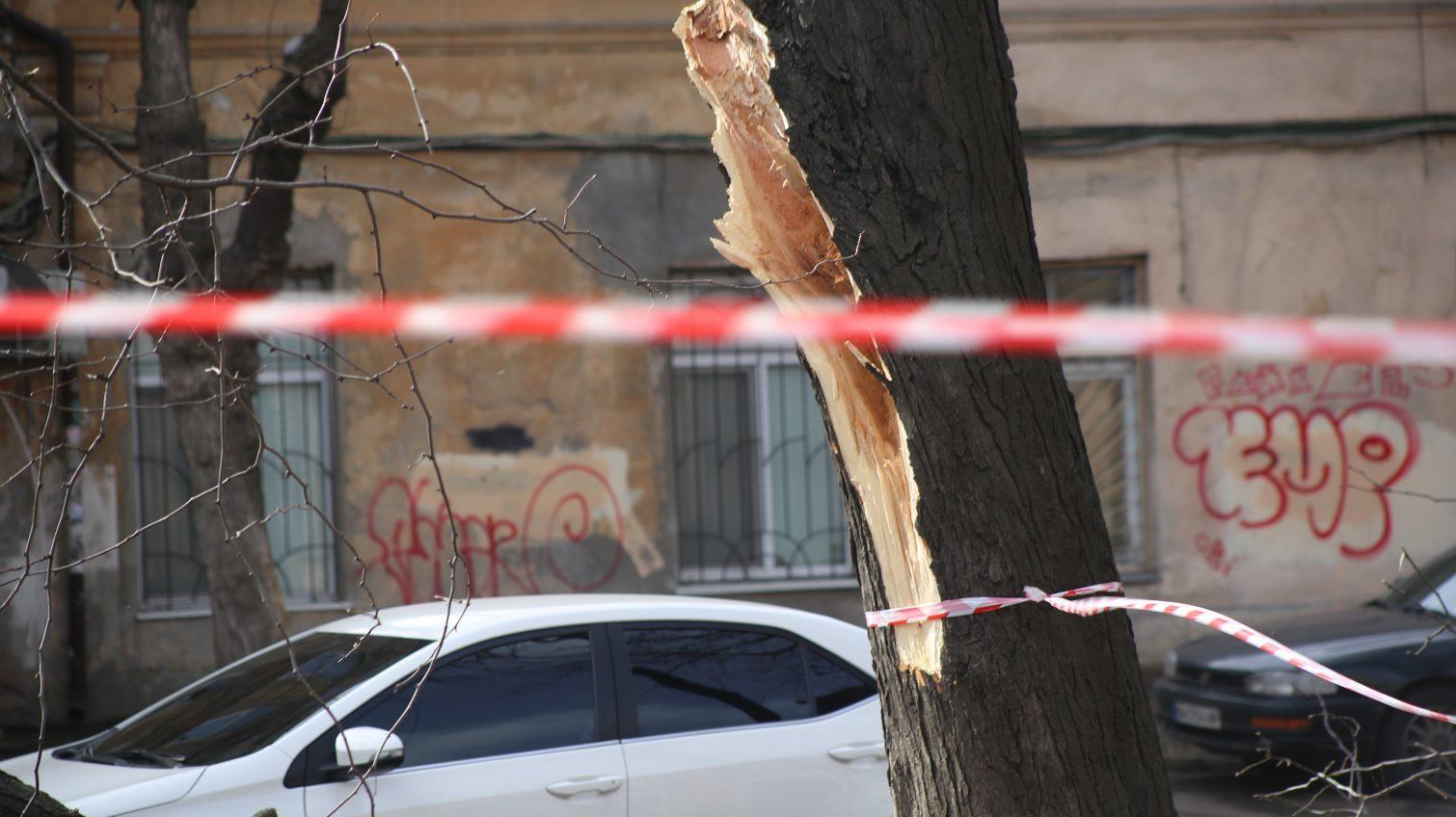 В Одессе после урагана восстановили электроснабжение школ и больниц, поваленные деревья все еще продолжают убирать «фото»