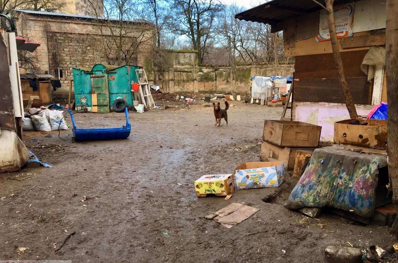 «Хожу по трамваям, прошу собакам на еду»: реалии приюта в парке Савицкого (фото, видео) «фото»