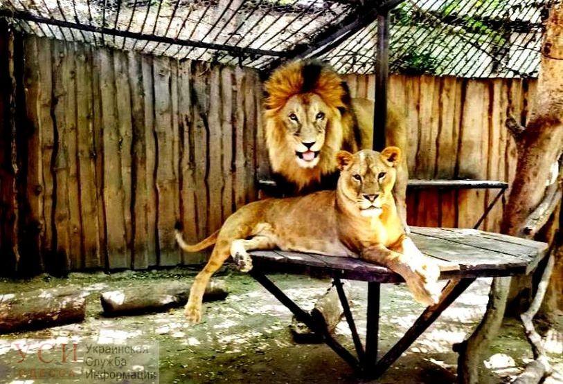 Одесситы выбрали лучшую пару зоопарка (фото, видео) «фото»
