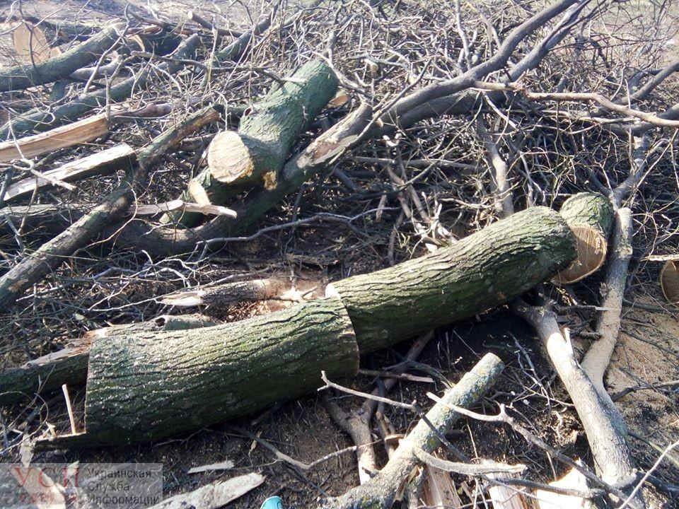 Активисты возмущены дорогой в Преображенском парке и уверены, что она не для зоопарка «фото»