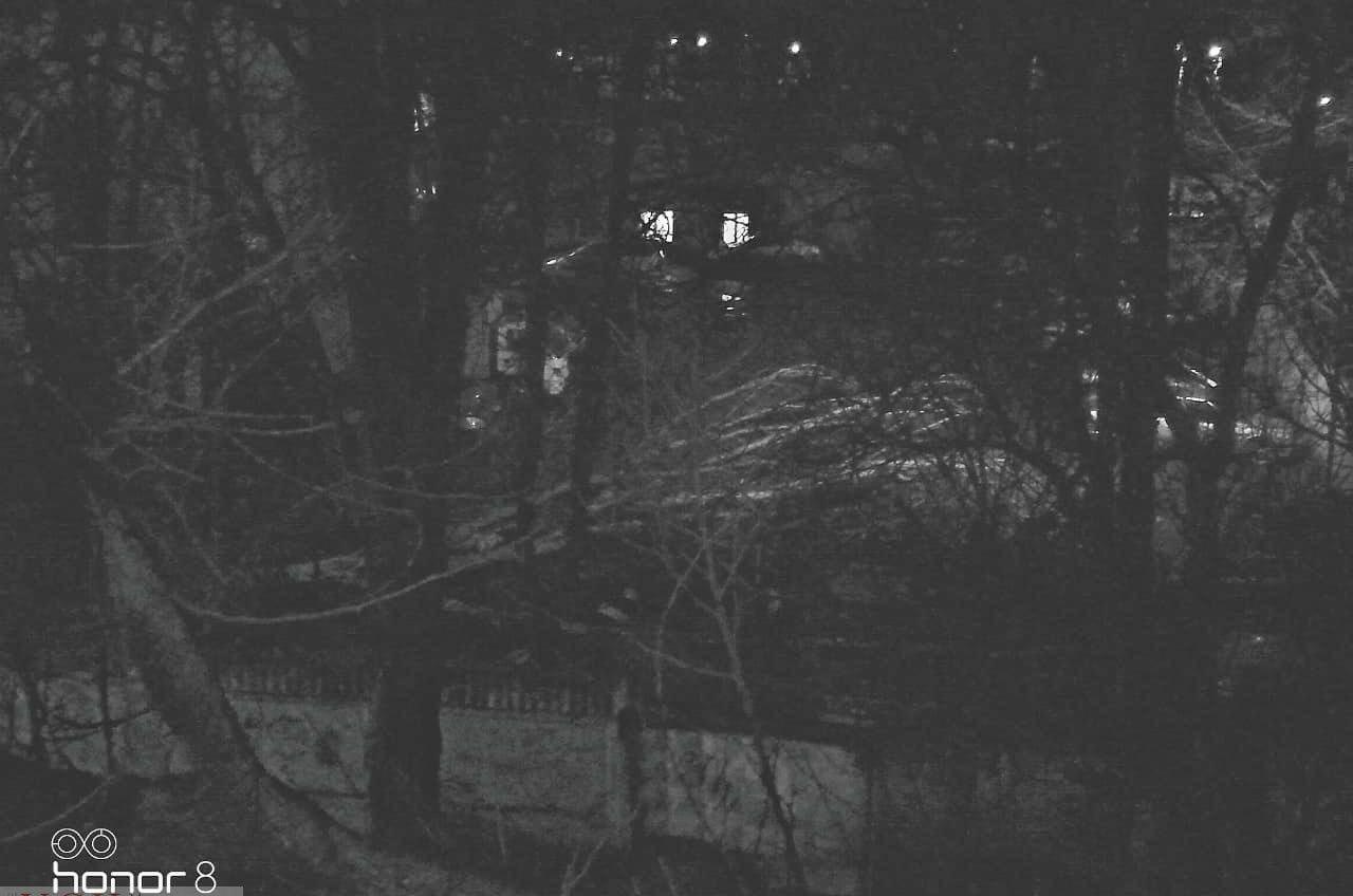 Сильный ветер повалил дерево на Филатова (фото) «фото»