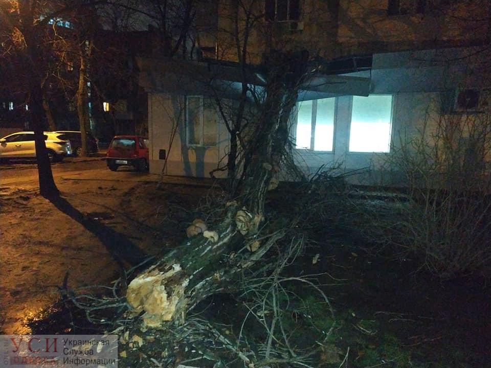 Древопад: из-за сильного ветра в Одессе повалило акацию (фото) «фото»