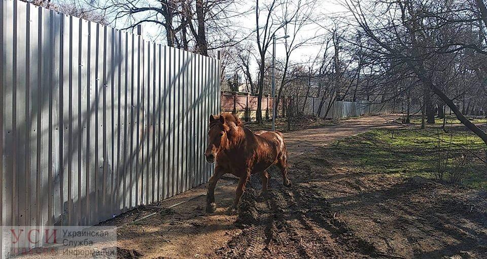 Строптивая лошадь сбежала из Одесского зоопарка, но затем сама вернулась (фото, видео) «фото»