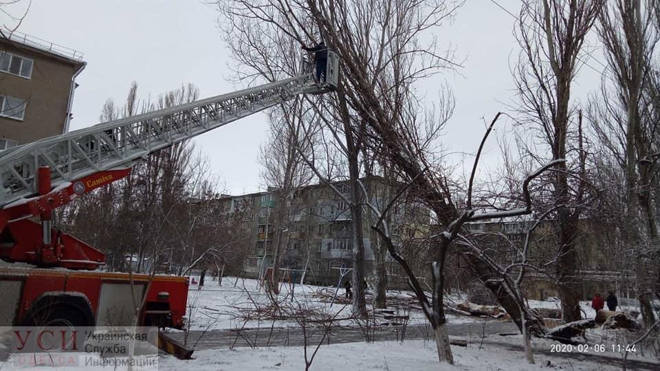Штормовой ветер повалил в Одессе 86 деревьев, а в области обесточил 91 населенный пункт (фото) «фото»