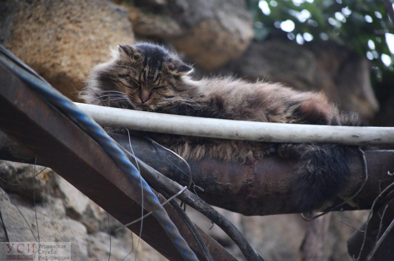 Одесские коты: на улицах, в кофейнях и двориках (фотоподборка) «фото»