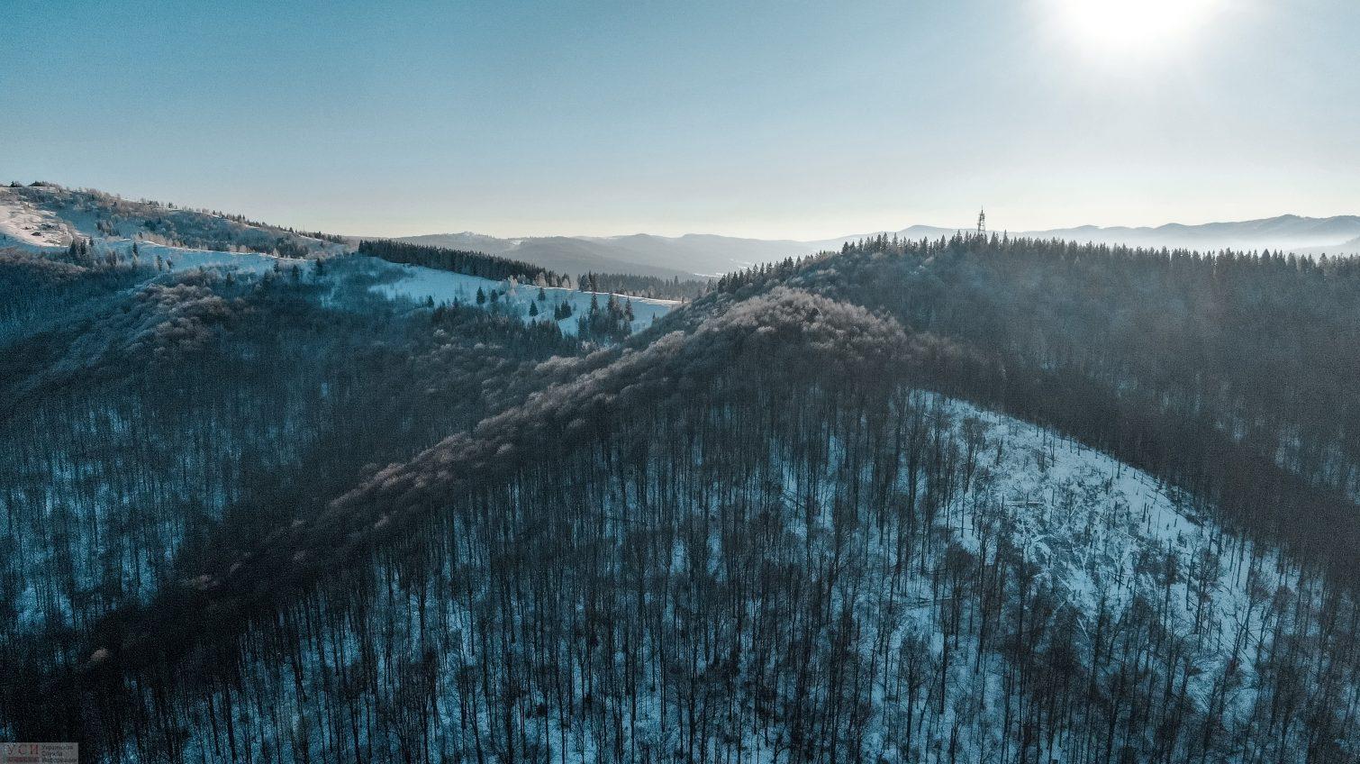 В Украине займутся инвентаризацией лесов – в год на это планируют тратить порядка 9 миллионов «фото»