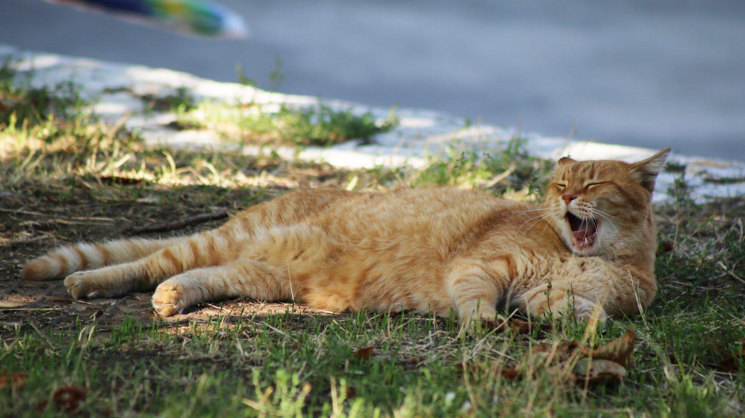 Весна продолжается: в Одессе уик-энд начнется с «плюсовой» температуры «фото»