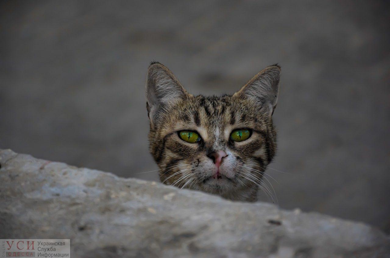 В Украине открылась единая горячая линия помощи животным «Добрый дом» «фото»