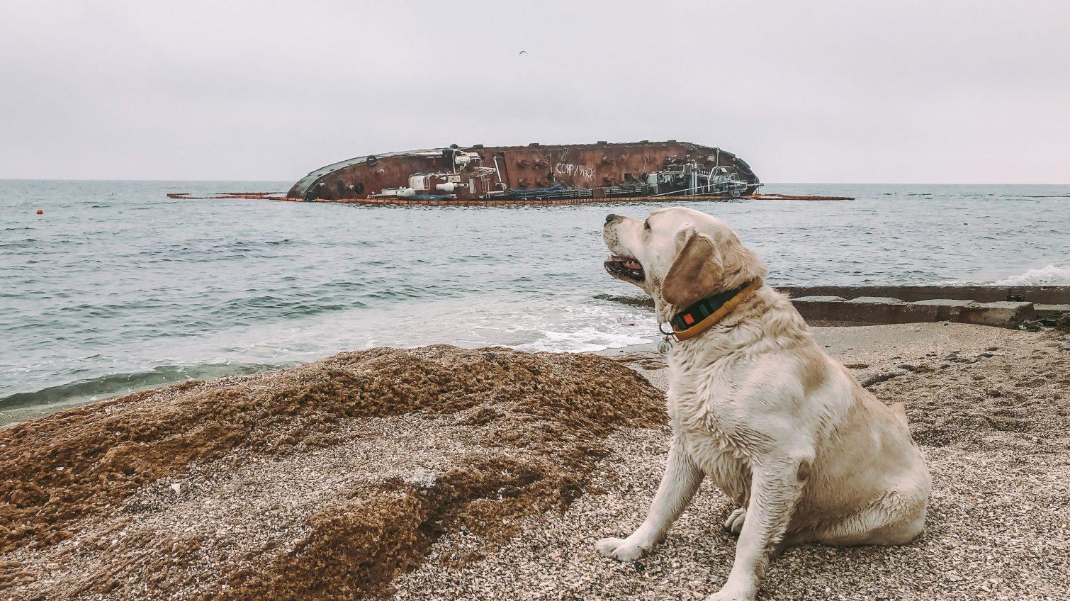 """На пляже """"Дельфин"""" возле танкера Delfi установят специальный пост спасателей «фото»"""