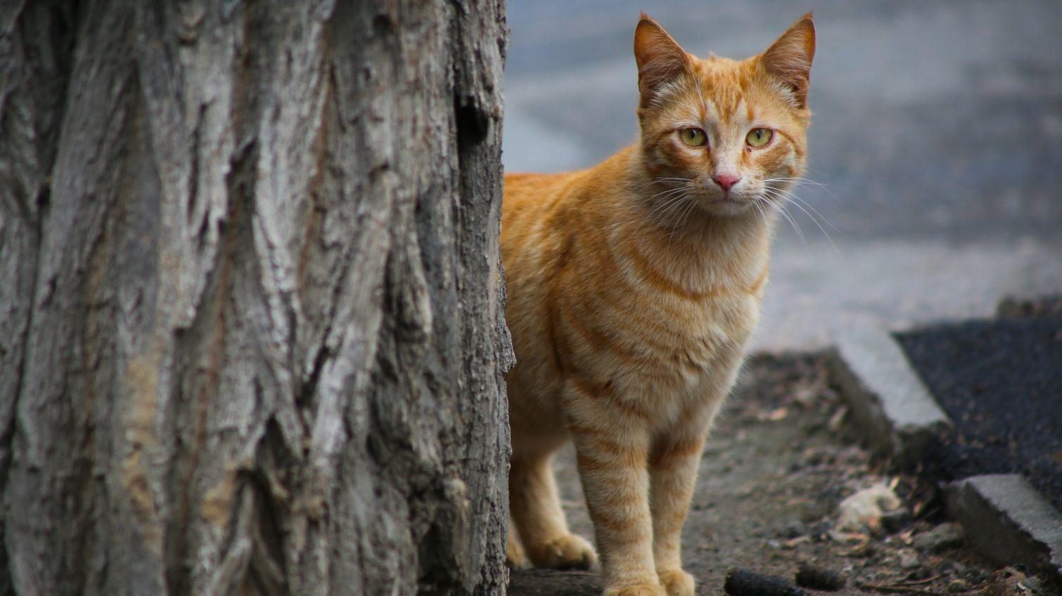 Одесские котики на карантине (фоторепортаж) «фото»