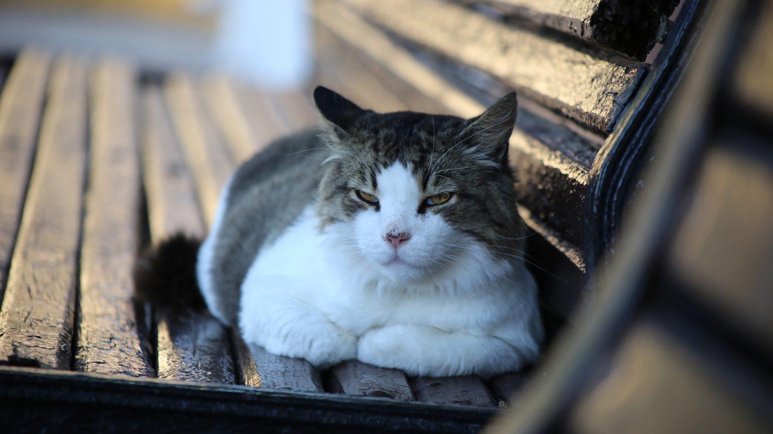 В Одессе потратят почти миллион гривен на стерилизацию и вакцинацию котов «фото»
