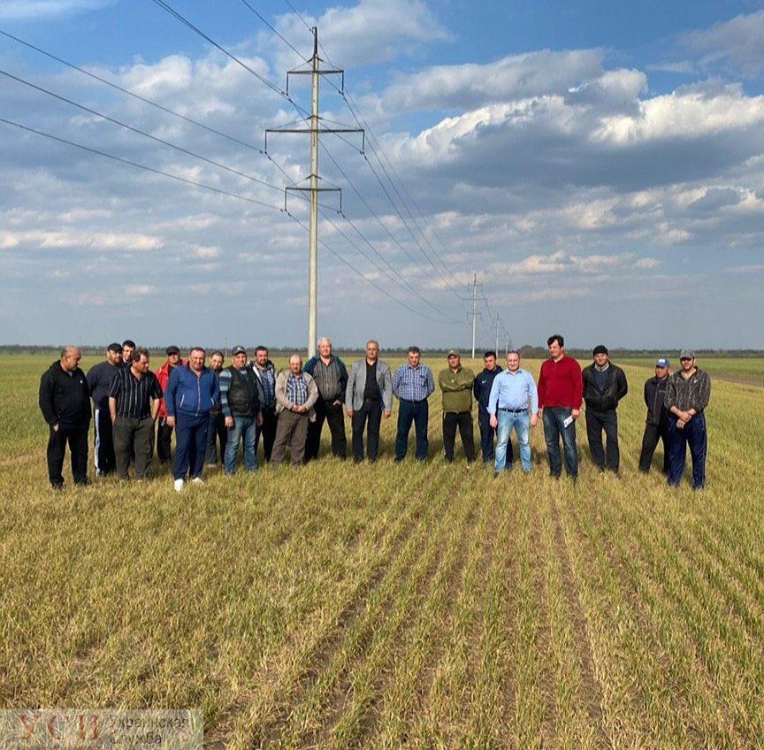 Из-за засухи и потери урожая фермеры Одесской области обратились к президенту (фото) «фото»