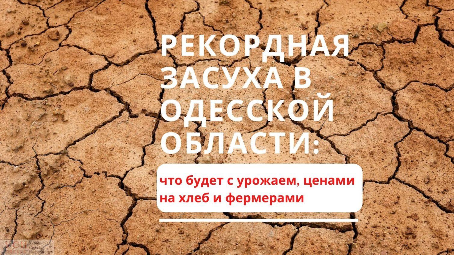 Рекордная засуха в Одесской области: фермеры говорят о чрезвычайной ситуации и не знают, что будет с урожаем «фото»