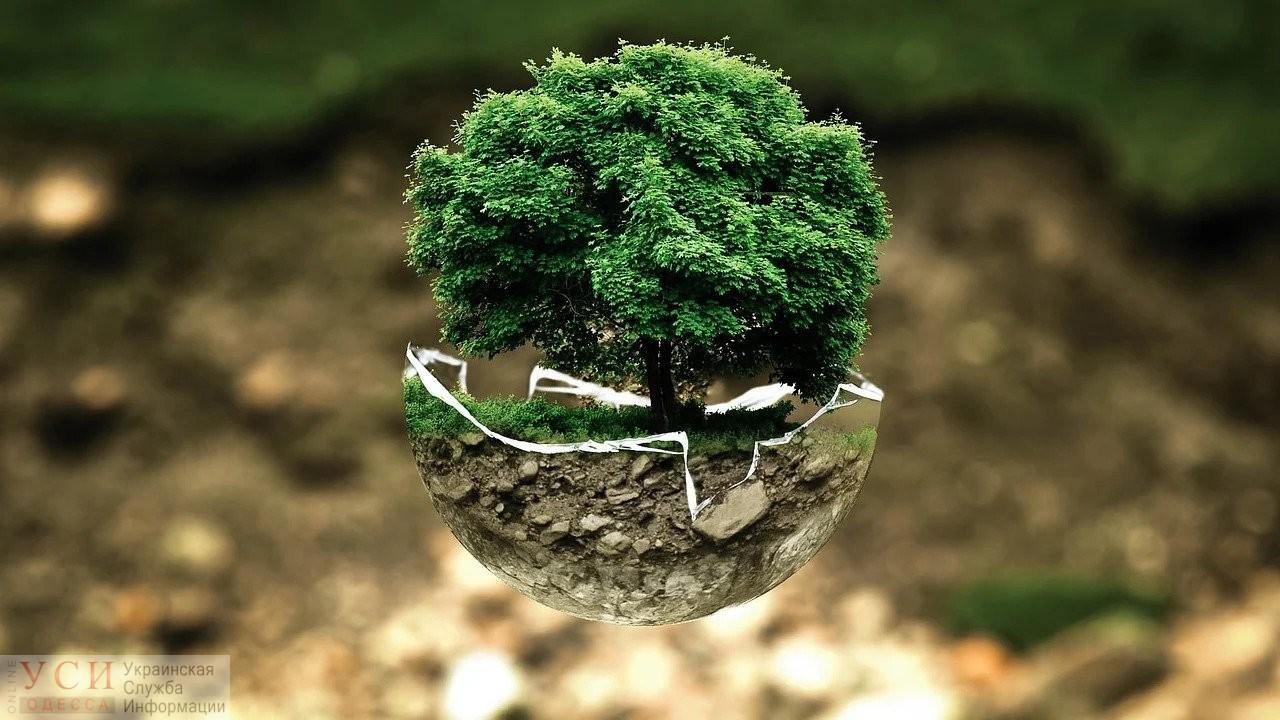 Вторая попытка: в Одессе создали интерактивную карту деревьев «фото»