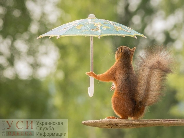 В воскресенье в Одессе ожидается легкое похолодание и дождь «фото»