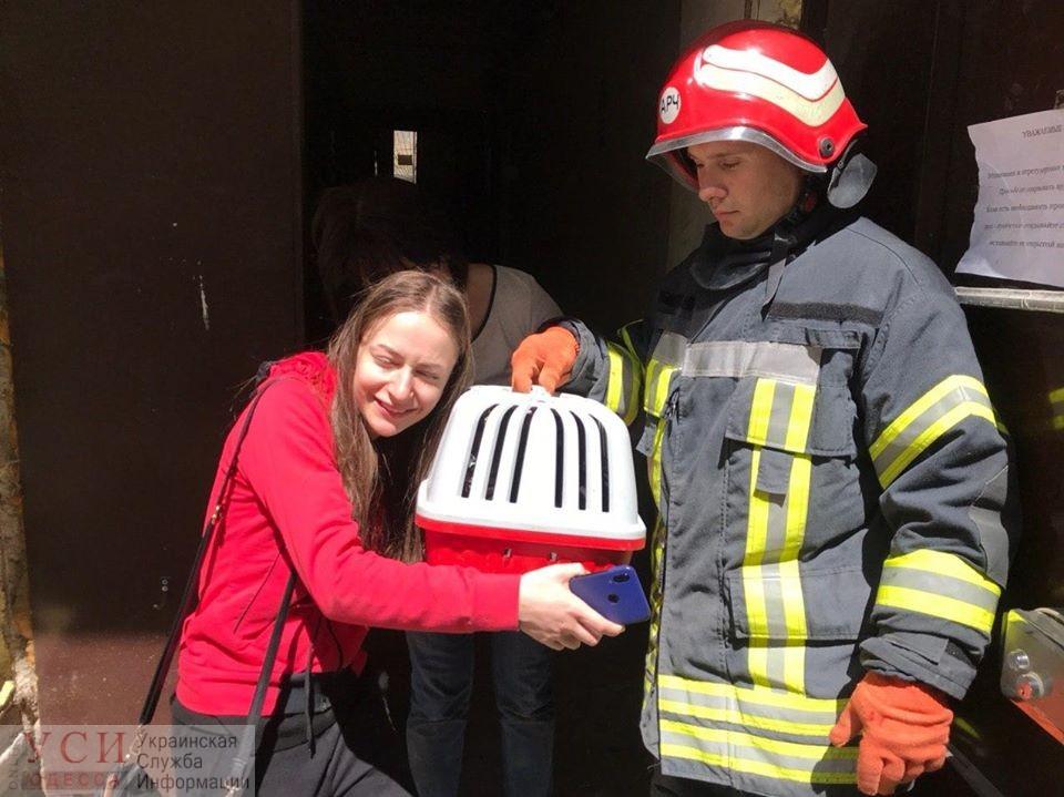 Хэппи-энд: пропавшего кота Тео нашли на чердаке рухнувшего дома на Торговой (фото) «фото»