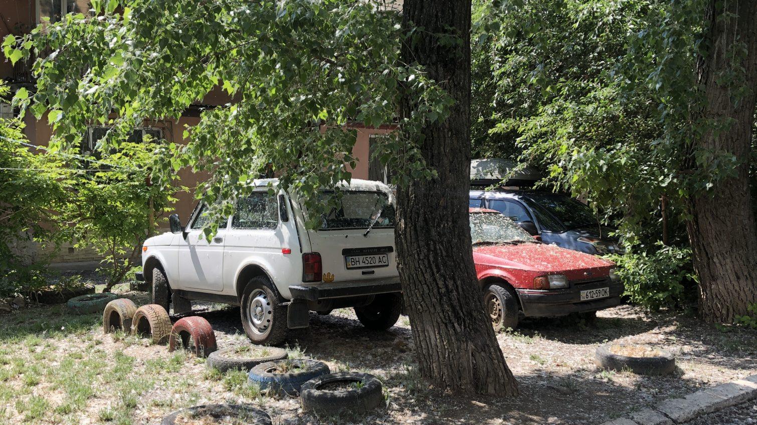 Нашествие тополиного пуха в Одессе: Слободка уже задыхается (фоторепортаж) «фото»