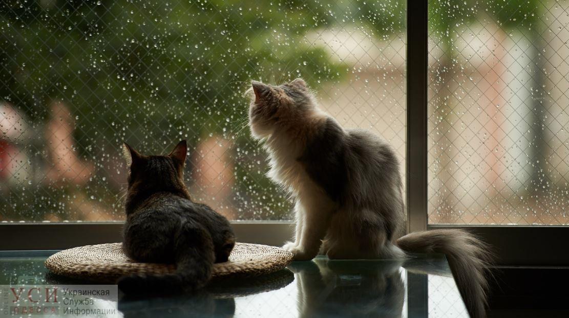 В четверг снова обещают дожди «фото»