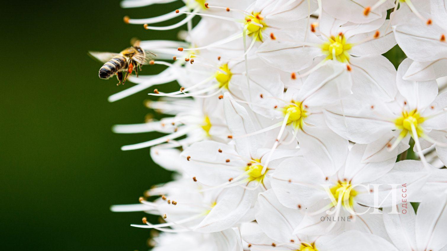 Роскошные цветы и сочная зелень: Одесский ботсад начал принимать посетителей (фоторепортаж) «фото»