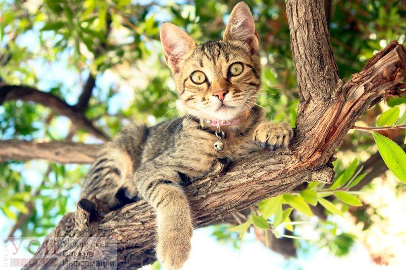 На поселке Котовского спасают кота, который сутки сидит на дереве (видео) «фото»