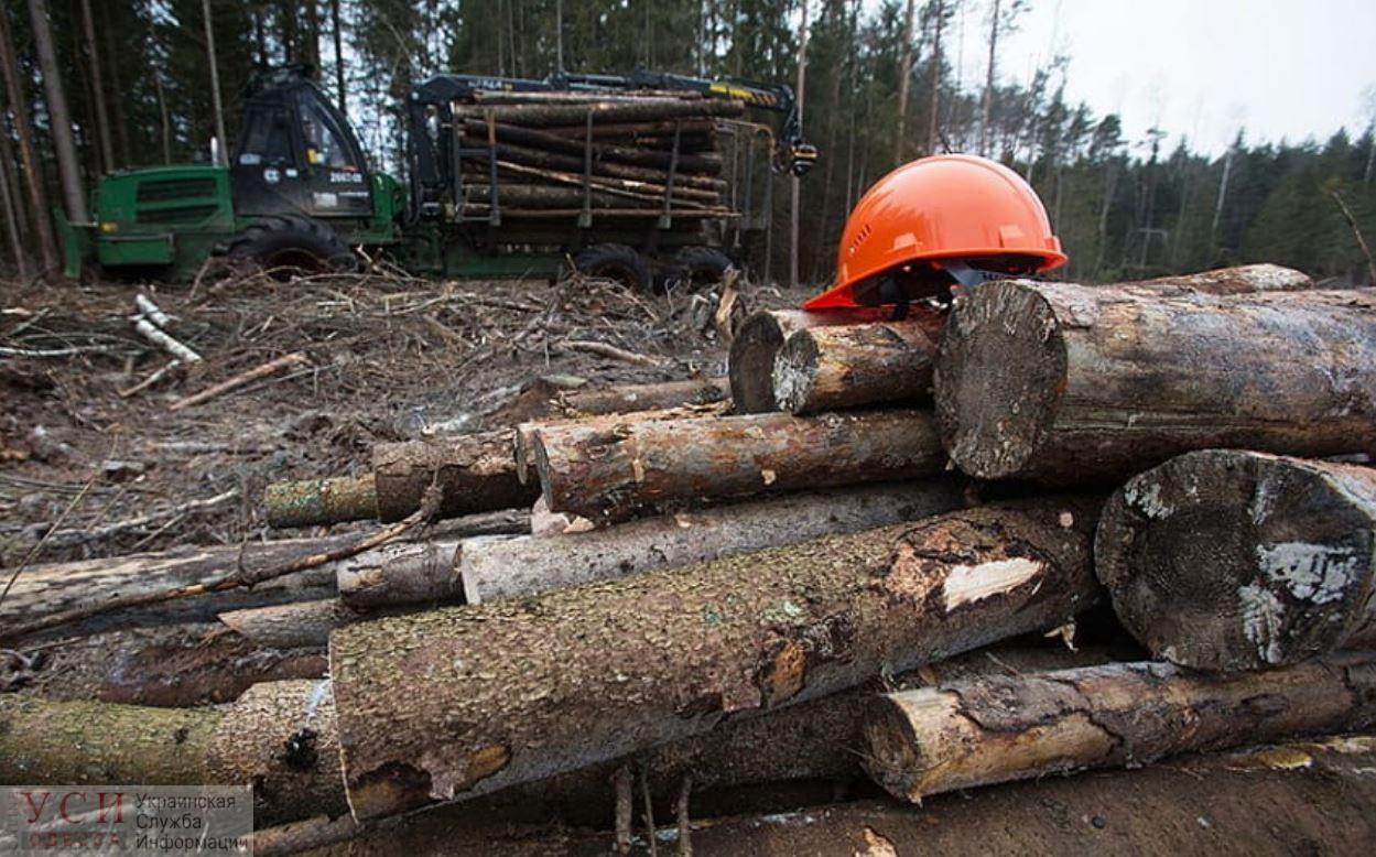 За вымогательство взятки лесничий из Одесской области предстанет перед судом «фото»