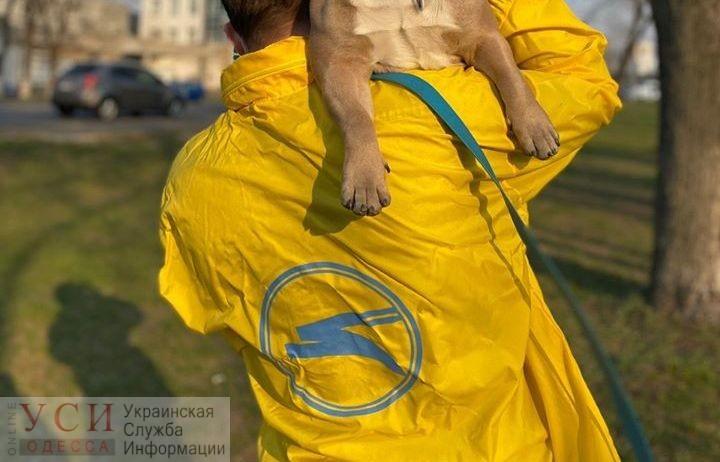 От обезвоживания и слабости: в самолете украинской компании погибли 38 щенков (осторожно, фото) «фото»