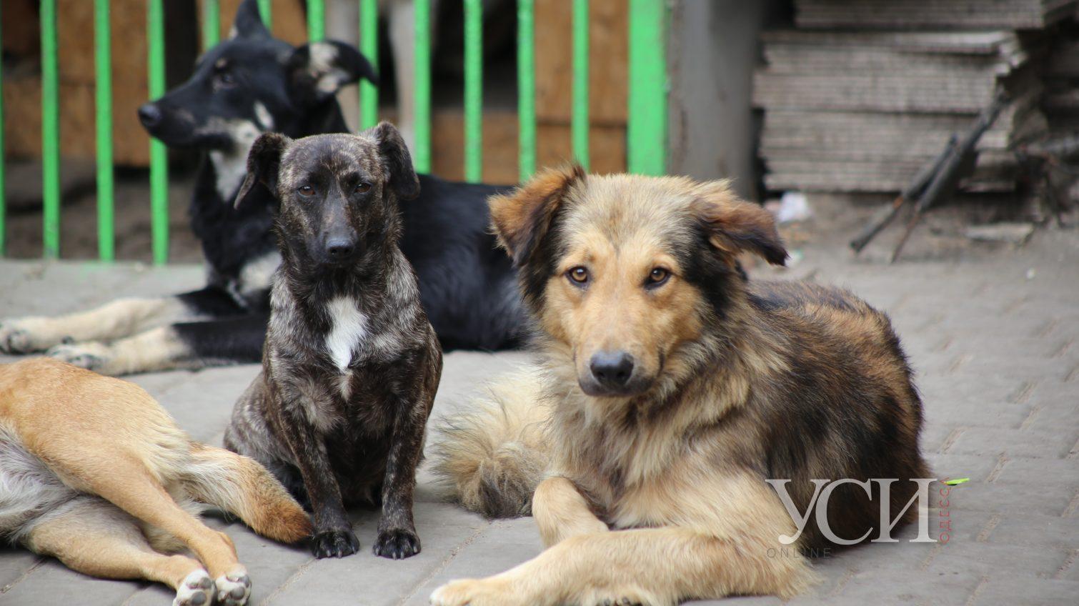В Одессе спасти животных из горящего приюта помог неравнодушный прохожий (фоторепортаж) «фото»