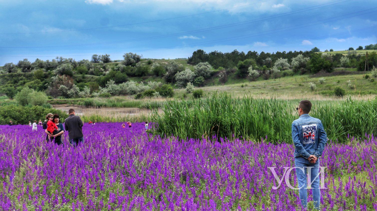 Инстаграмеры истоптали фиолетовое поле под Теплодаром (фоторепортаж) «фото»