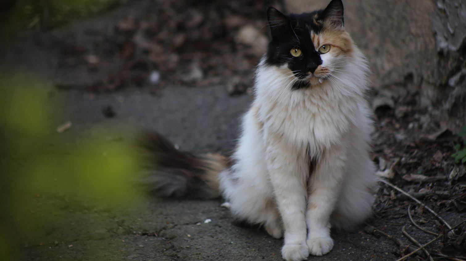 В Одессе оштрафовали живодера, который выбросил кота со связанными лапами из окна 4 этажа «фото»