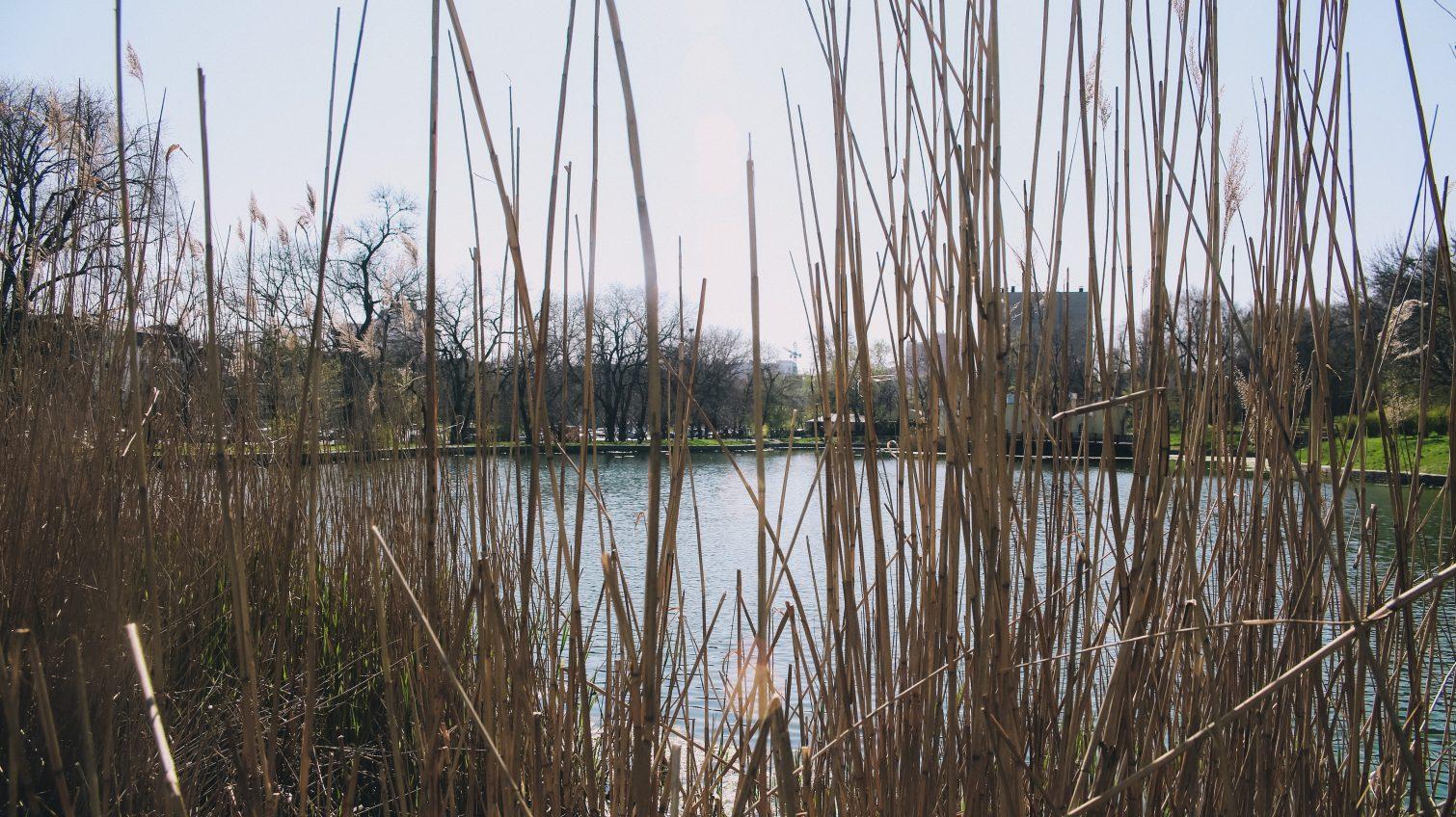 Спустя 10 лет: арендатор Дюковского парка согласился улучшить зеленую зону «фото»