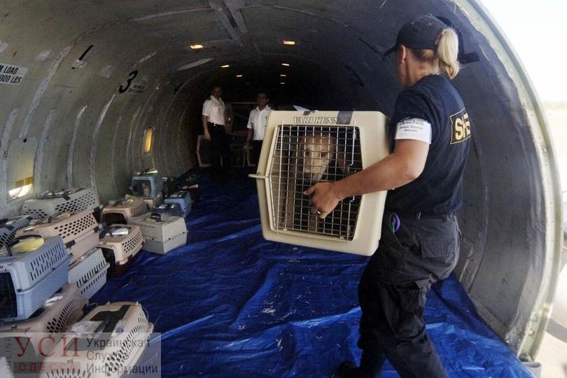 Гибель щенков во время рейса: МАУ временно отказались перевозить животных самолетами Boeing 767 «фото»