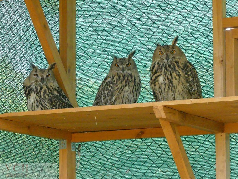 Филинов из Одесского зоопарка поселили в заповедник: вскоре их выпустят на волю (фото) «фото»