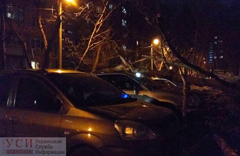 Мэрия заплатит одесситке почти 335 тысяч гривен за автомобиль, на который упало дерево «фото»