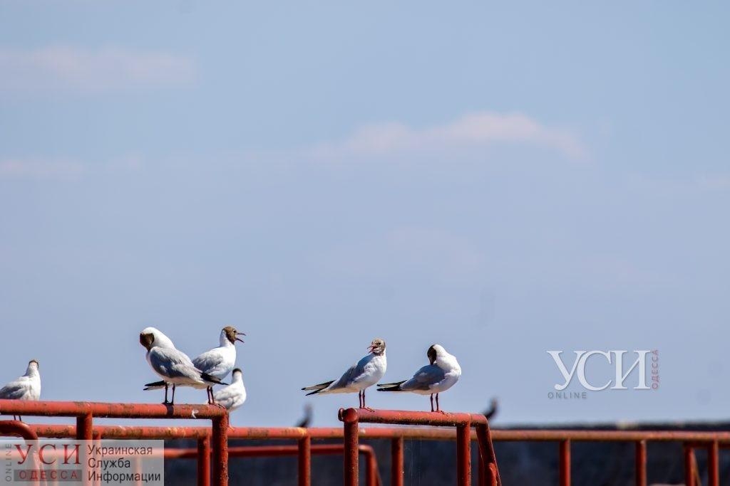 Пятница в Одессе будет теплой «фото»