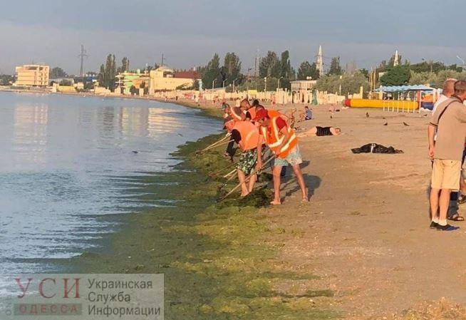 Бульдозер на службе экологии: в Одессе чистят море от водорослей (фото) «фото»
