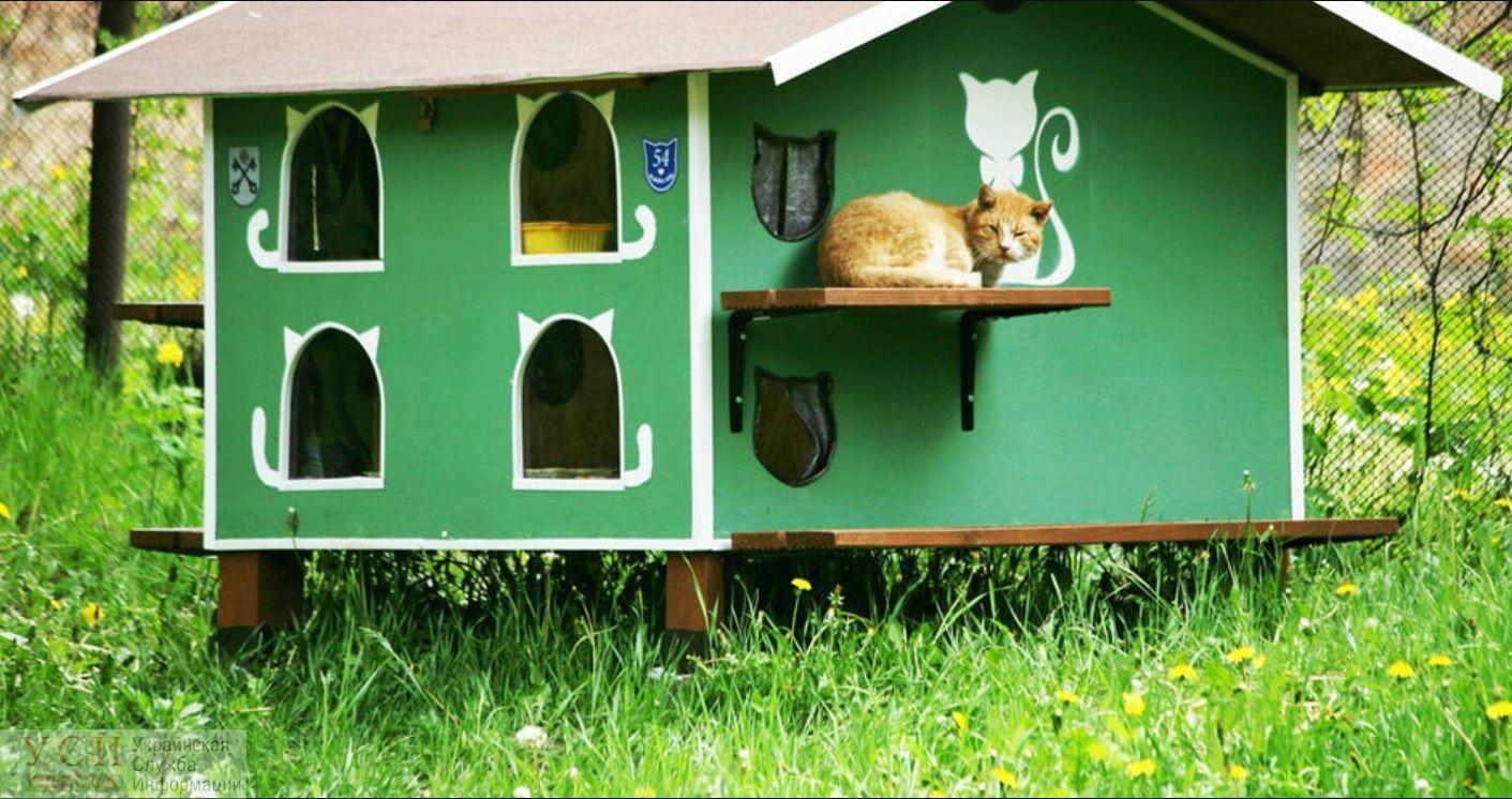 В Одессе установят 48 домиков для бездомных животных «фото»
