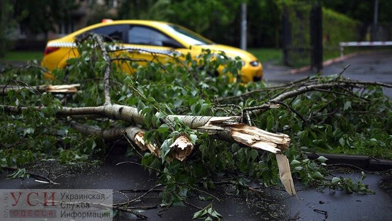 В Одессе во время урагана упало 63 дерева: два человека попали больницу ОБНОВЛЕНИЕ «фото»