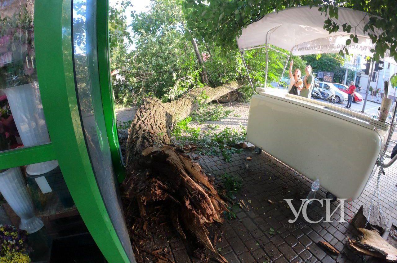 На 7 Фонтана упало массивное дерево: женщина чудом осталась жива (видео, фото) «фото»