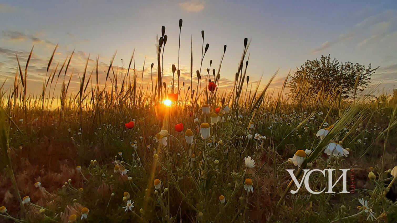Волшебные рассветы августа над полями и виноградниками в селе Шабо (фоторепортаж) «фото»