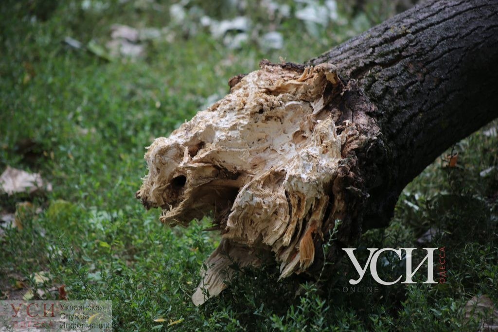 Одессит, получивший инвалидность из-за падения дерева, отсудил у мэрии почти 200 тысяч гривен «фото»