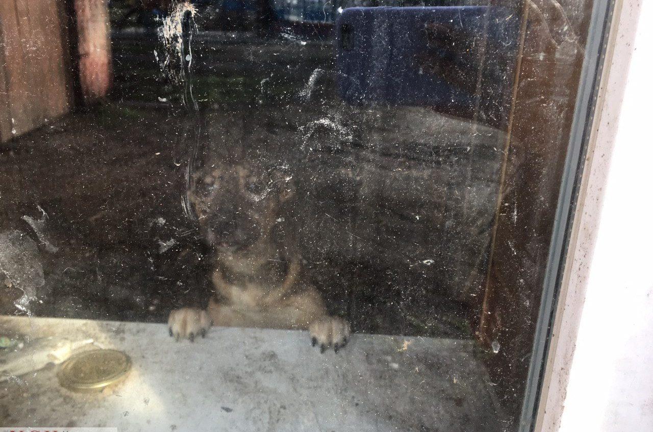 Приют для бездомных животных в Савицком парке выселяют: там находится около 80 собак «фото»