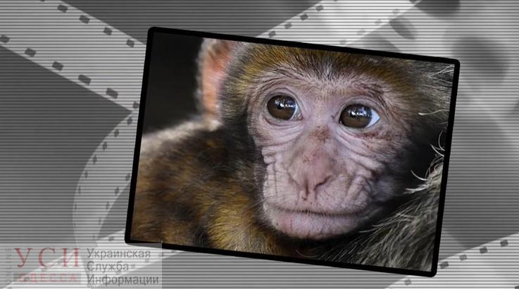 В Одесском зоопарке выпустили ролик против фотографирования с животными на улицах (видео) «фото»