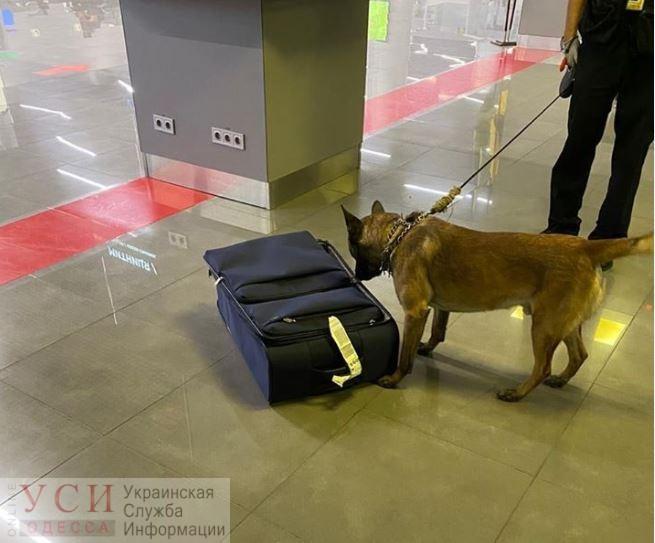 В Одессе служебный пес разоблачил иностранца, который привез наркотики на миллион под видом спортивного питания «фото»