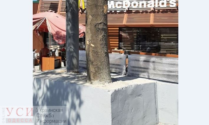 В Одессе рабочие закатали живое дерево в бетон (фото) «фото»