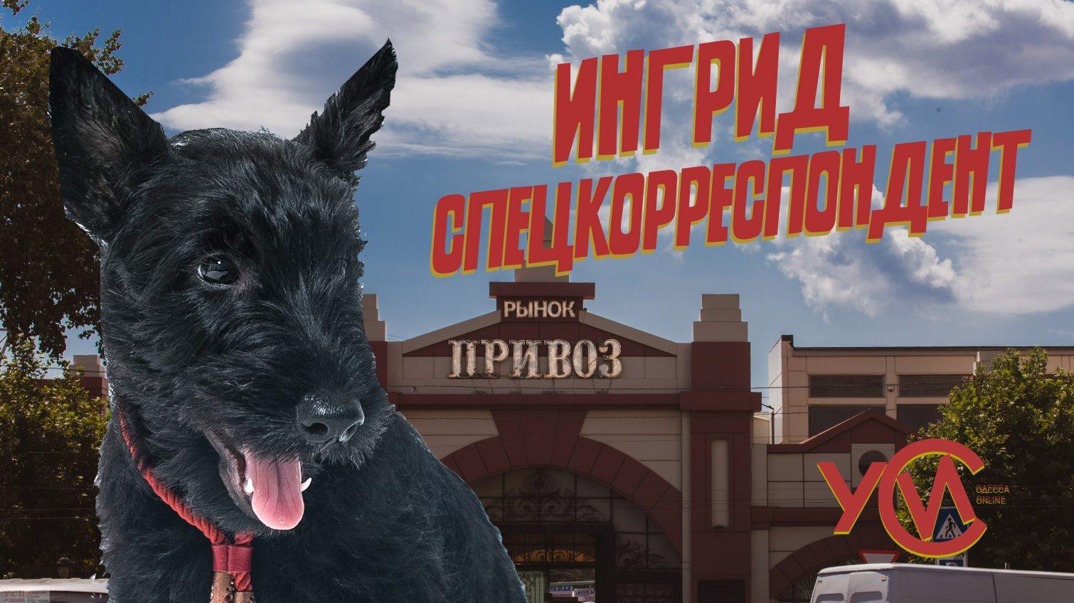 Привоз в августе: краски живой Одессы глазами скотчтерьера Ингрид (фоторепортаж, видео) «фото»