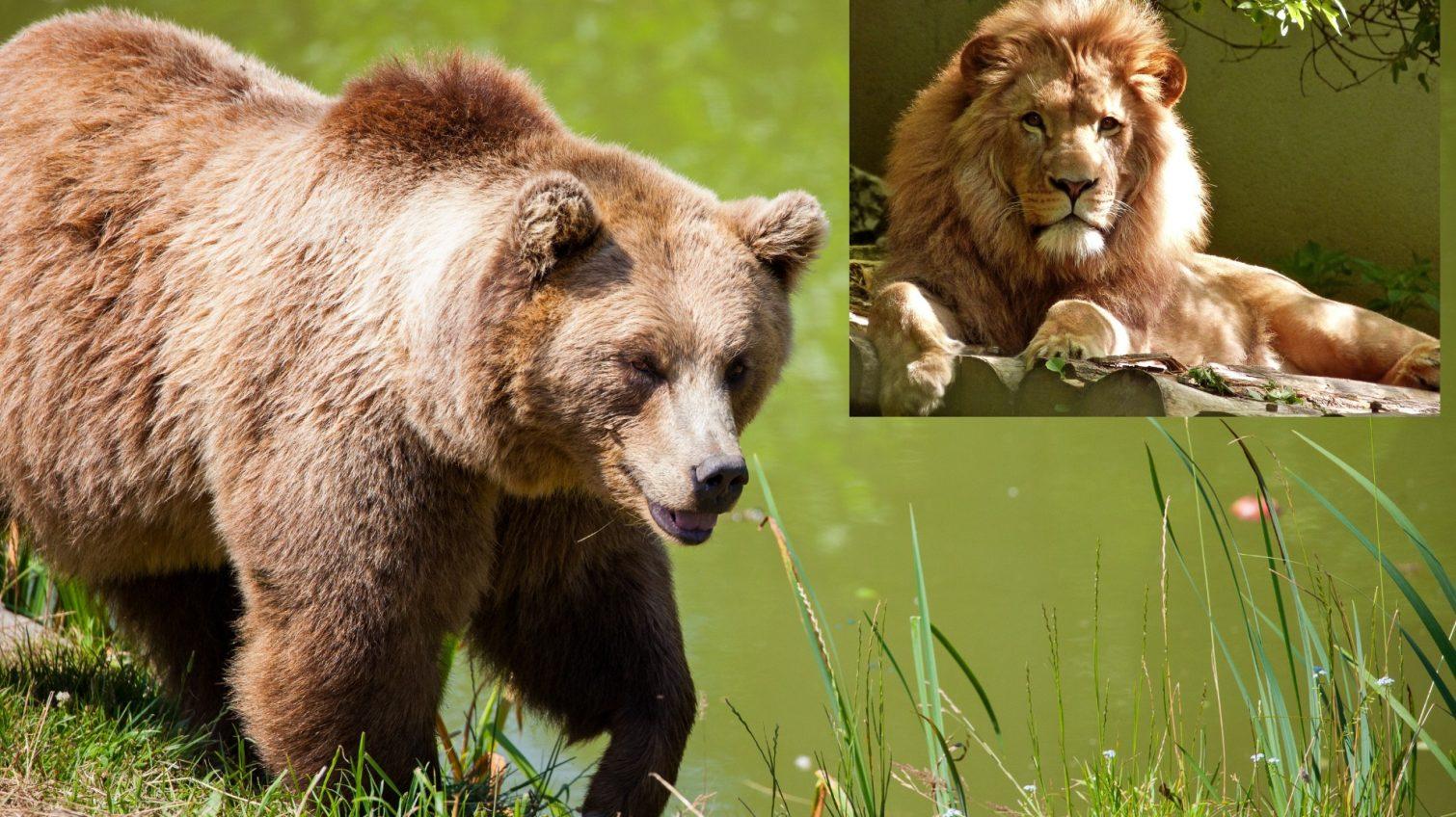 Конфискованных Минюстом медведей и львов подарили Национальным паркам «фото»