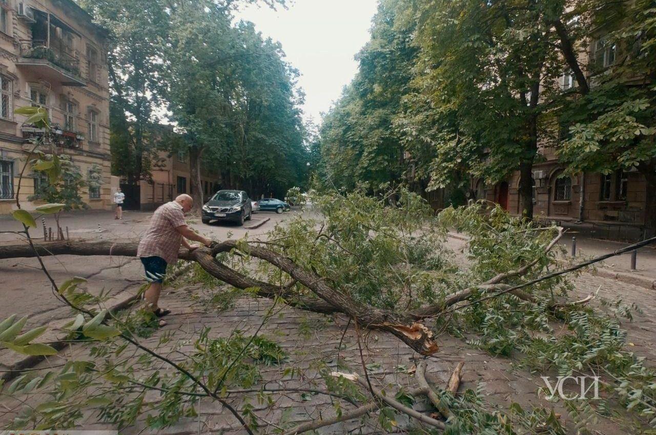 Упавшее дерево на Кузнечной оборвало провода (фото) «фото»